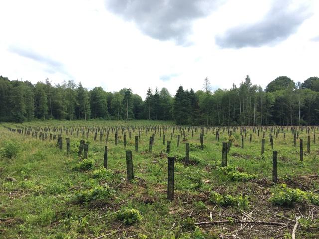 Contrat de Suivi Plantation Nord Seine Forêt 2a
