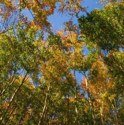 Nord Seine Forêt 2a - contrat de gestion option groupement forestier